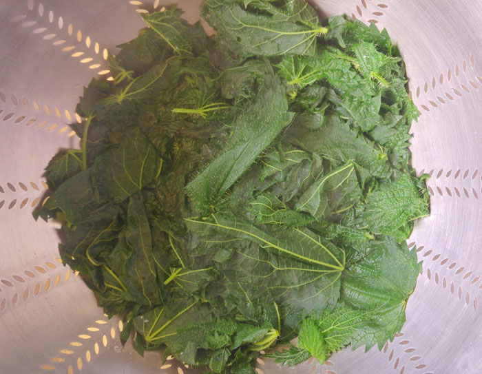 Cooked nettle